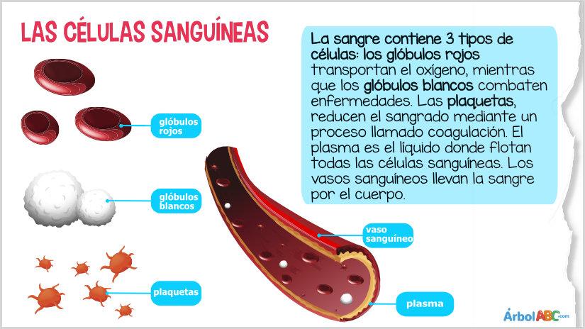 los vasos sanguíneos que llevan sangre al corazón se llaman cuestionario