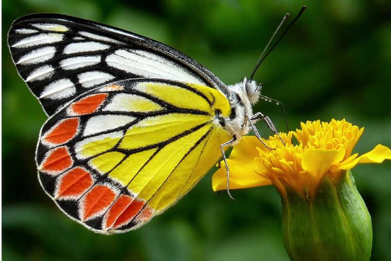 Las mariposas   Árbol ABC